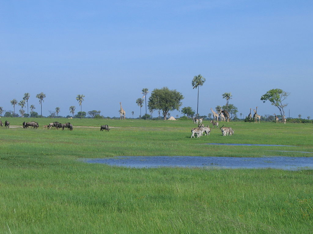 """Wetland-hwange"" by Laura (cardamom) - http://www.flickr.com/photos/twonickels/90916795/. Licensed under CC BY 2.0 via Wikimedia Commons."