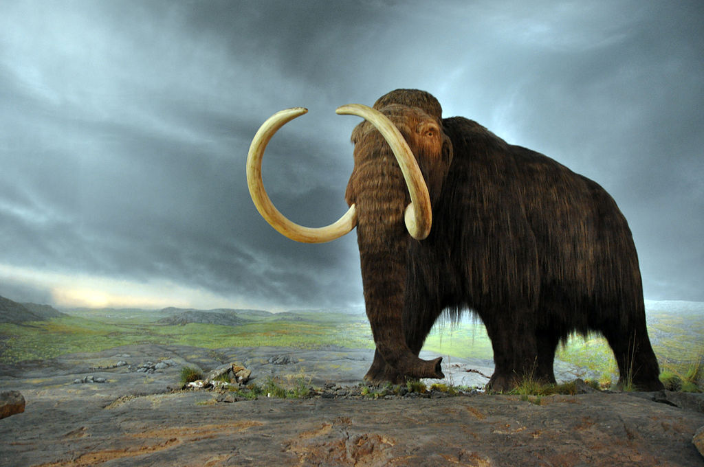"""Woolly mammoth"" by Flying Puffin - MammutUploaded by FunkMonk. Licensed under CC BY-SA 2.0 via Commons."