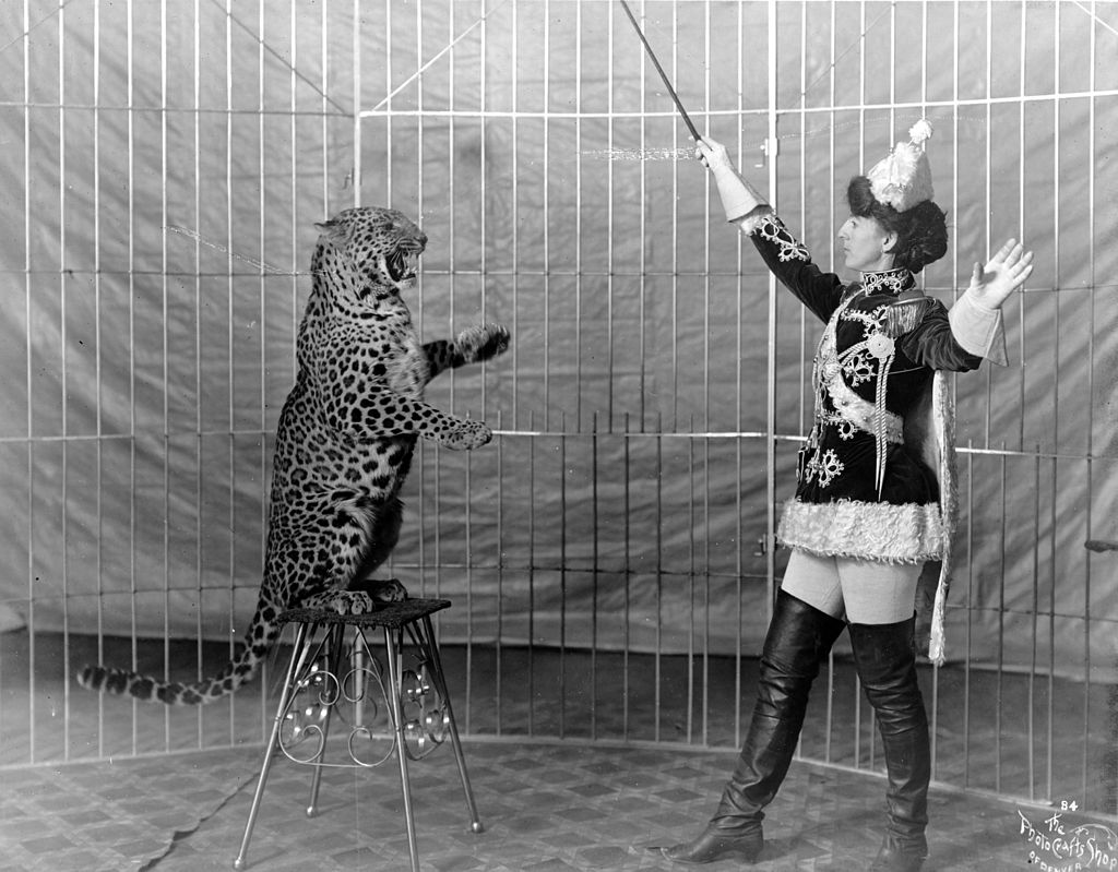 """Female animal trainer and leopard, c1906"" by Photo Crafts Shop of Denver. - This image is available from the United States Library of Congress's Prints and Photographs division under the digital ID cph.3c17923. Licensed under Public Domain via Commons."